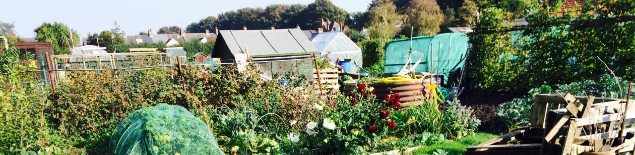 Telegraph Road Allotments